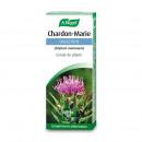 Chardon Marie extrait de plante fraiche