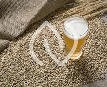 Levure de bière