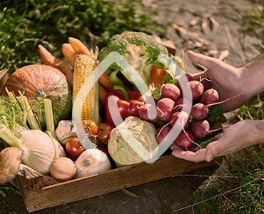 Fruits et légumes bio dans un ecagette